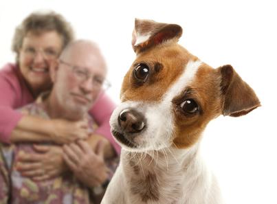chien avec pet-sitter
